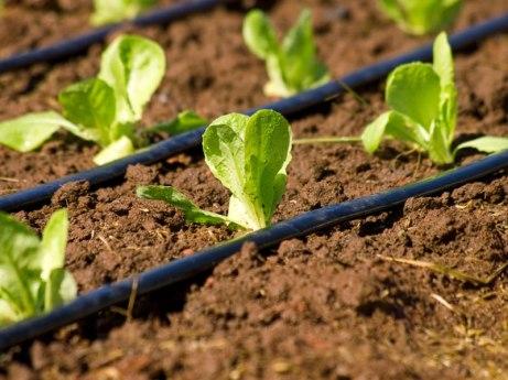 irrigazione-goccia1